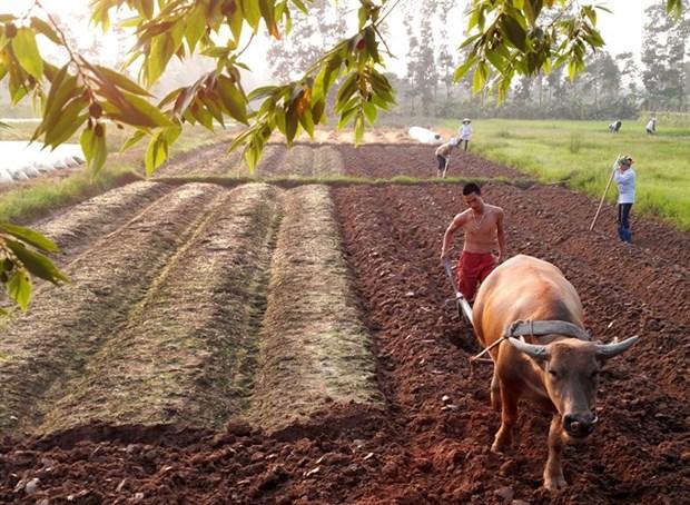 Farmers hail land tax waiver hinh anh 1