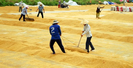 Changes to institutions urged to improve rice value chain hinh anh 1