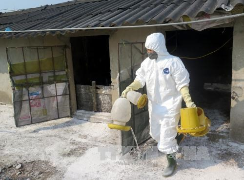 New A/H5N6 avian flu outbreak spotted in Quang Tri hinh anh 1