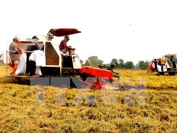 Hau Giang seeks investment in hi-tech agriculture hinh anh 1
