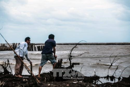 Ca Mau proposes funding priority for climate change projects hinh anh 1
