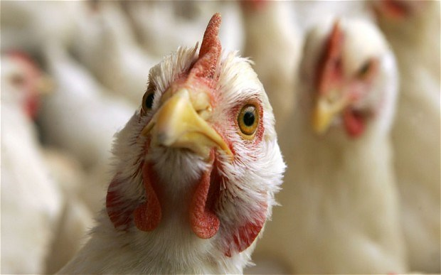 Vietnam on high alert of avian influenza virus intrusion hinh anh 1