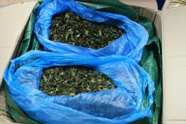 Nearly three tonnes of Khat leaves seized in Hai Phong port hinh anh 1