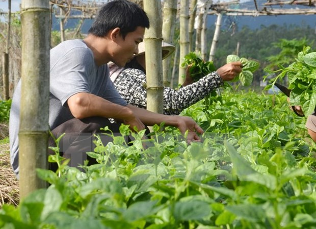 Netherlands seeks agricultural cooperation with HCM City hinh anh 1
