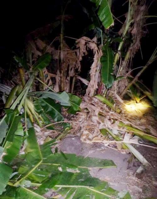 Wild elephants destroy crops in Dak Lak hinh anh 1