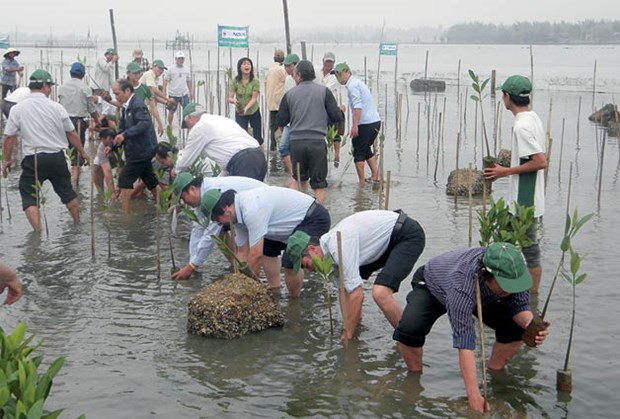 Thua Thien – Hue plants mangrove forests for eco-tours hinh anh 1
