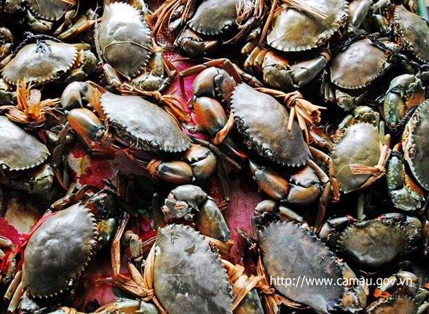 Ca Mau develops ecological crab farming hinh anh 1