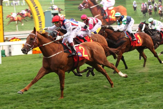 New 70-ha racecourse opens in Lam Dong hinh anh 1