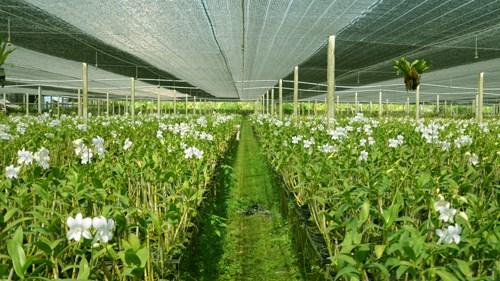 Phu Yen develops hi-tech agricultural zone hinh anh 1