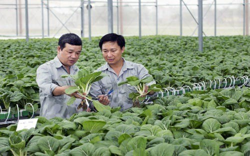 PM okays 4.4 billion USD package for high-tech agriculture hinh anh 1