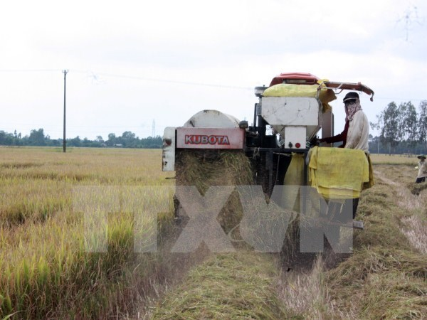 Rice exporters suffer losses due to sudden domestic price hike hinh anh 1