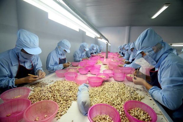 Talk helps businesses access agricultural processing technology hinh anh 1