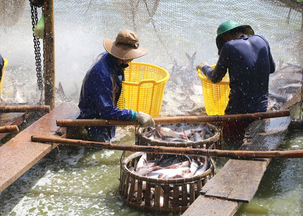 US continues anti-dumping duty order on Vietnamese fish fillets hinh anh 1