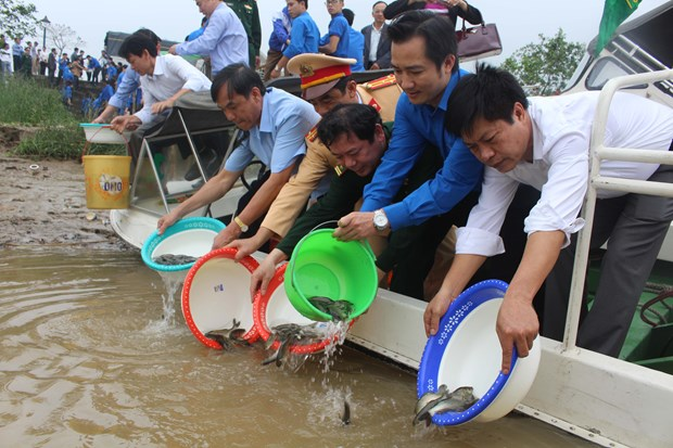 Young shrimps, fish released for aquatic resources hinh anh 1