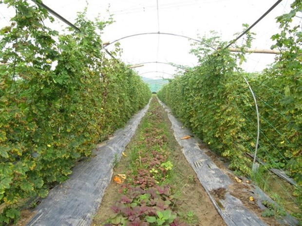 Organic agriculture seeks solutions to grow hinh anh 1