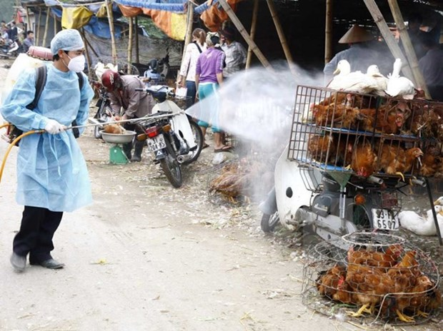 Ministry launches national bird flu control programme hinh anh 1