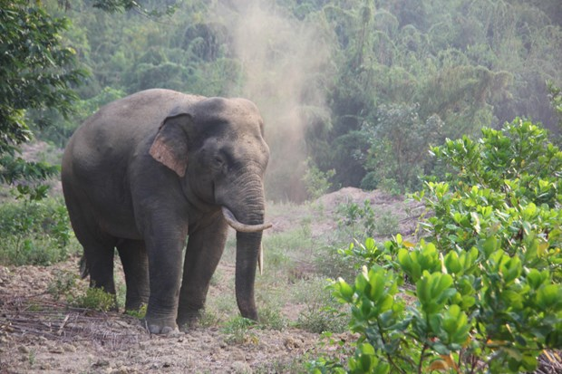 Measures proposed to conserve wild elephants in Dong Nai hinh anh 1