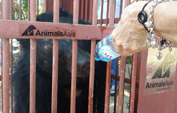 Animals Asia takes care of more captive bears hinh anh 1