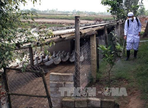 Thanh Hoa intensifies A/H7N9 avian flu prevention hinh anh 1