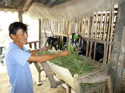 Project on climate change adaptation benefits Ben Tre province hinh anh 1