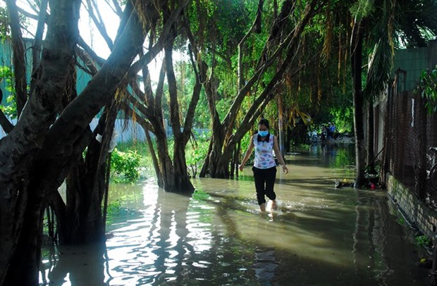 Cities not ready for climate change: experts hinh anh 1
