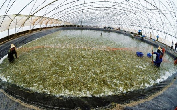 Plan to develop shrimp industry submitted hinh anh 1