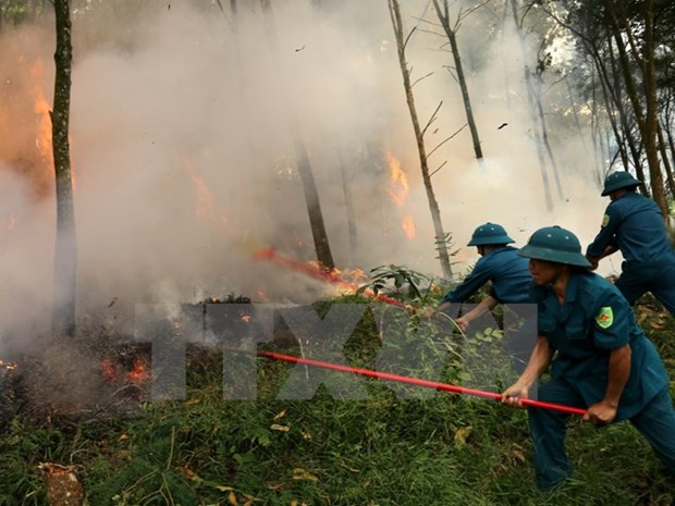 Central Highlands vigilant at forest fires during dry season peak hinh anh 1