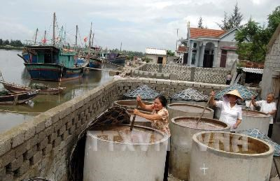 Nghe An builds seafood processing centres hinh anh 1