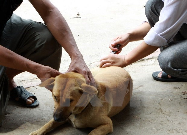 National programme on 2017-2021 rabies control begins hinh anh 1