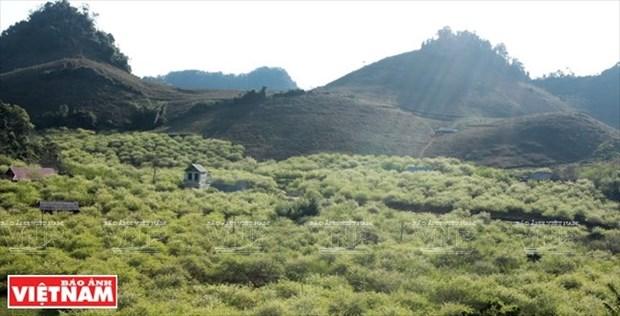 Tourism development prioritised in Son La hinh anh 1