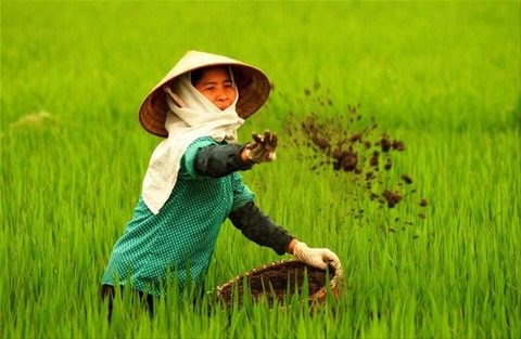 Sharp rise in fertiliser imports in first quarter hinh anh 1