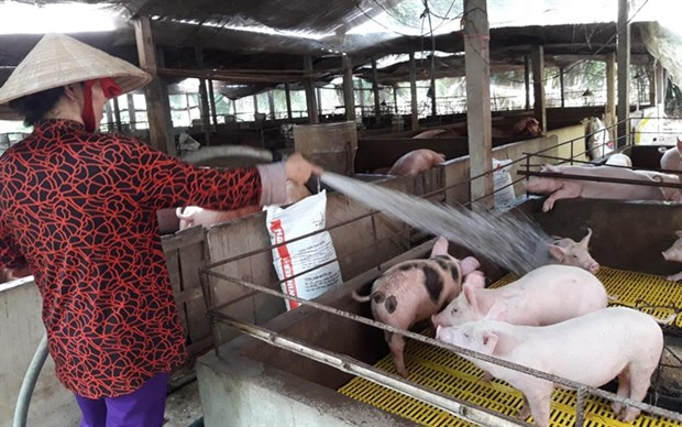 Agricultural minister calls on businesses to support pig farms hinh anh 1