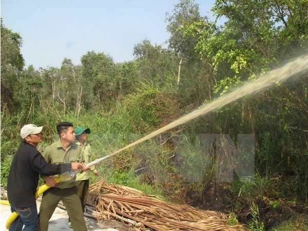 Ca Mau: over 11,000 hectares of forest on red fire alert hinh anh 1