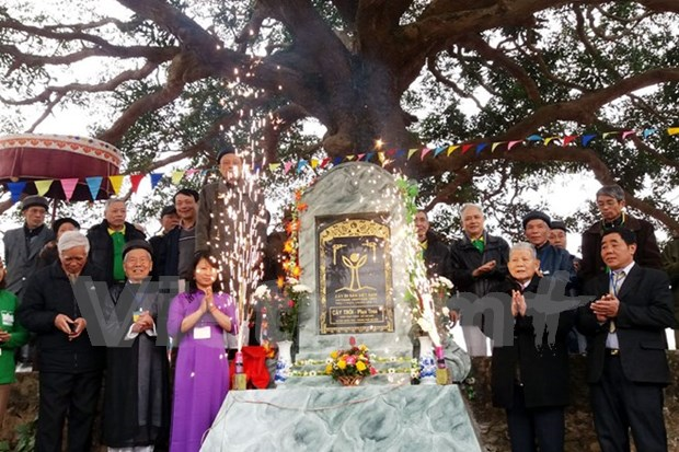 Conference promotes heritage tree preservation hinh anh 1