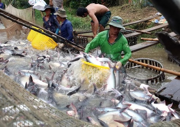 Aquatic export hits 2.1 bln USD in four months hinh anh 1