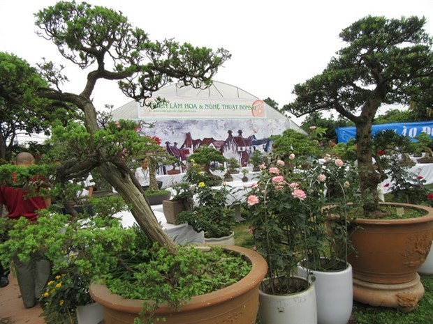 Bonsai, rose show cheers nature lovers hinh anh 1