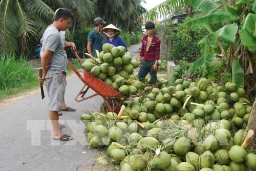 Fruit, vegetable exports hit 1 billion USD in 4 months hinh anh 1