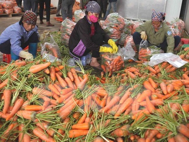 Fruit and veggie safety to be tightened hinh anh 1