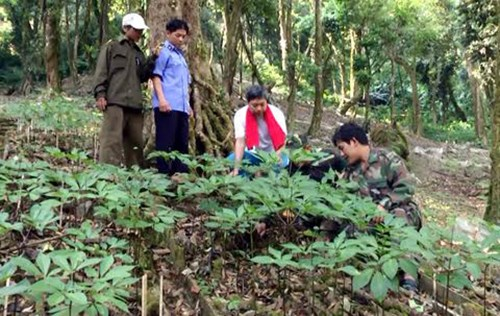 221 million USD Ngoc Linh ginseng project launched hinh anh 1