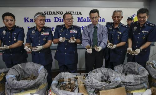 Malaysia seizes largest-ever amount of pangolin scales hinh anh 1