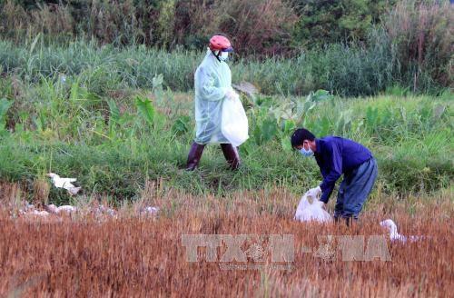 New avian flu outbreaks in Dak Lak, Dak Nong hinh anh 1