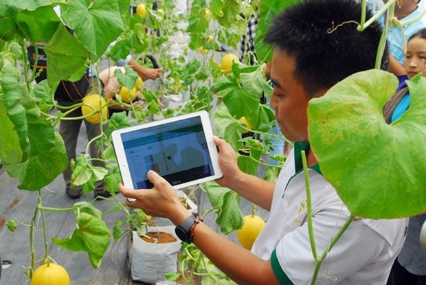 Nutifood invests in Dak Lak hi-tech agriculture hinh anh 1