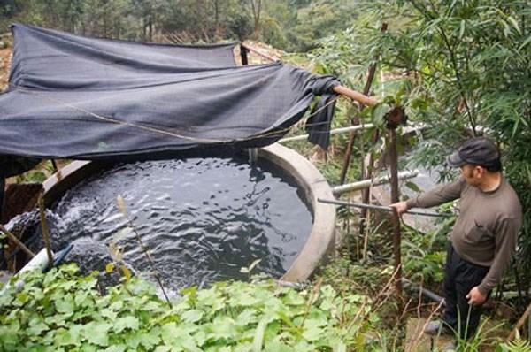 Salmon farming in Vietnam hinh anh 1
