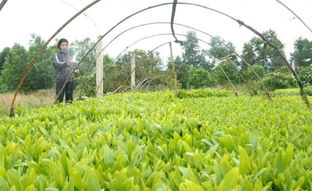 Farmers reap benefits of planting local trees hinh anh 1