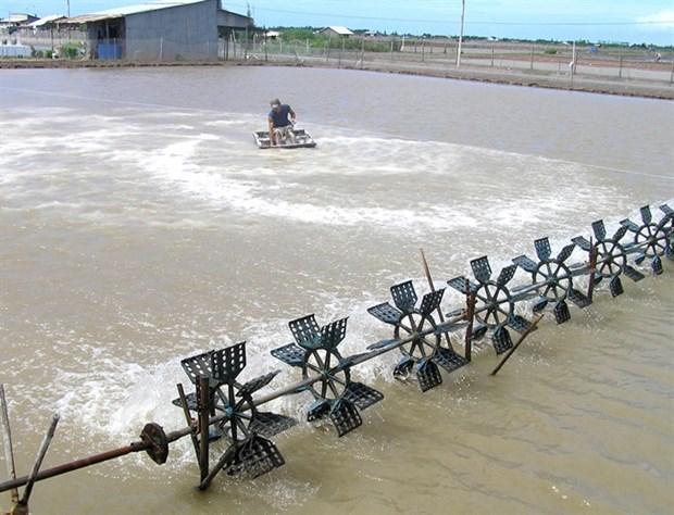 Shrimp aids climate change battle hinh anh 1