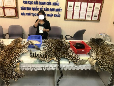 Wildlife products seized at Tan Son Nhat Airport hinh anh 1