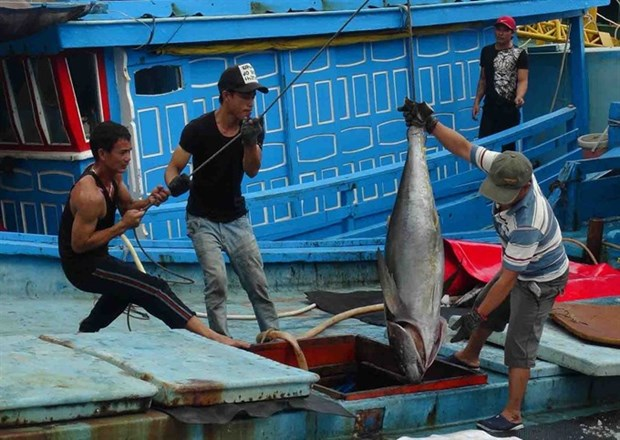 Worker safety at risk, especially in fishing hinh anh 1