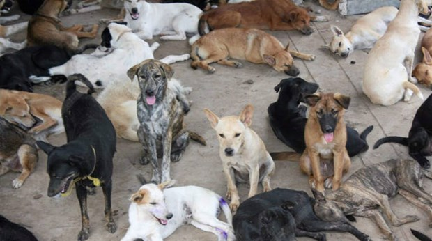 Thailand aims to eliminate rabies by 2020 hinh anh 1