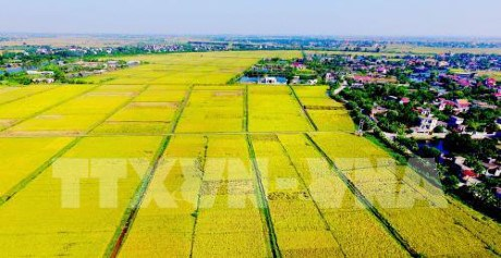 Thai Nguyen spends 840 billion VND on agricultural restructuring hinh anh 1