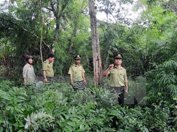 Forest coverage reaches over 40 percent: ministry hinh anh 1